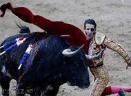 تصاویری از گاو بازی مرد یک چشم با گاو خشمگین