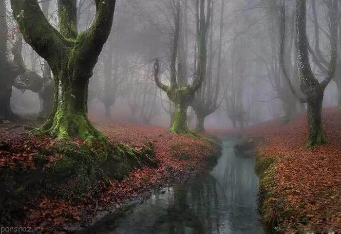 با جنگل های غیرمعمول و مرموز جهان آشنا شوید