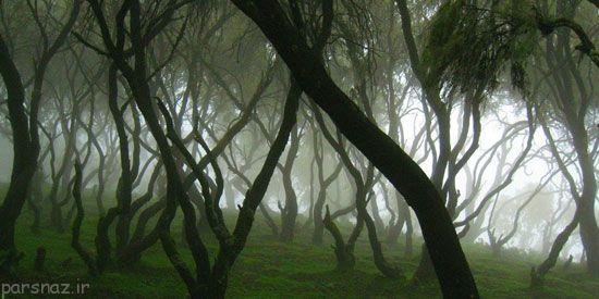 جذاب ترین جنگل های مه آلود در سراسر جهان