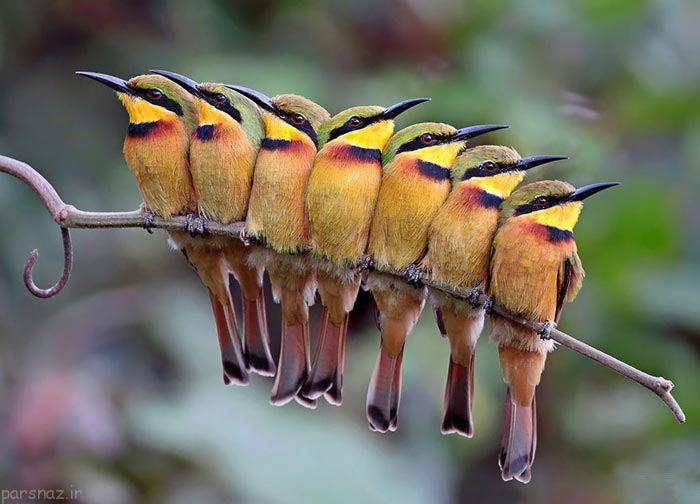تصاویری زیبا از حس نوع دوستی پرندگان