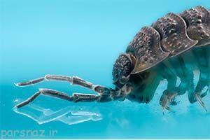 عکس های عجیب و جالب حشرات خانگی از نزدیک