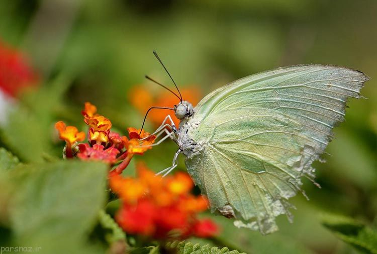 تصاویری زیبا و جذاب از دنیای حیات وحش