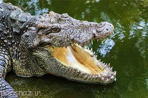 کشنده ترین جانوران و خطرناکترین آنها را بشناسید