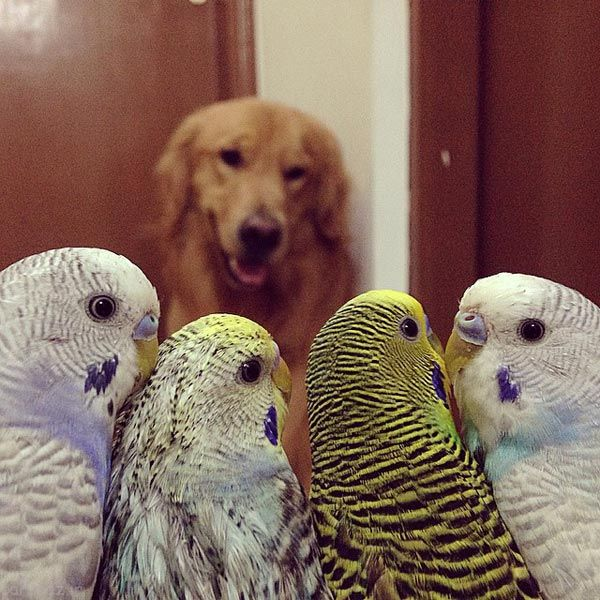 عکس های جالب از زندگی دوستانه سگ و پرنده ها