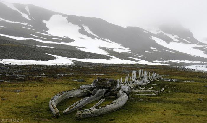 نگاهی به طبیعت بکر و زیبای قطب جنوب