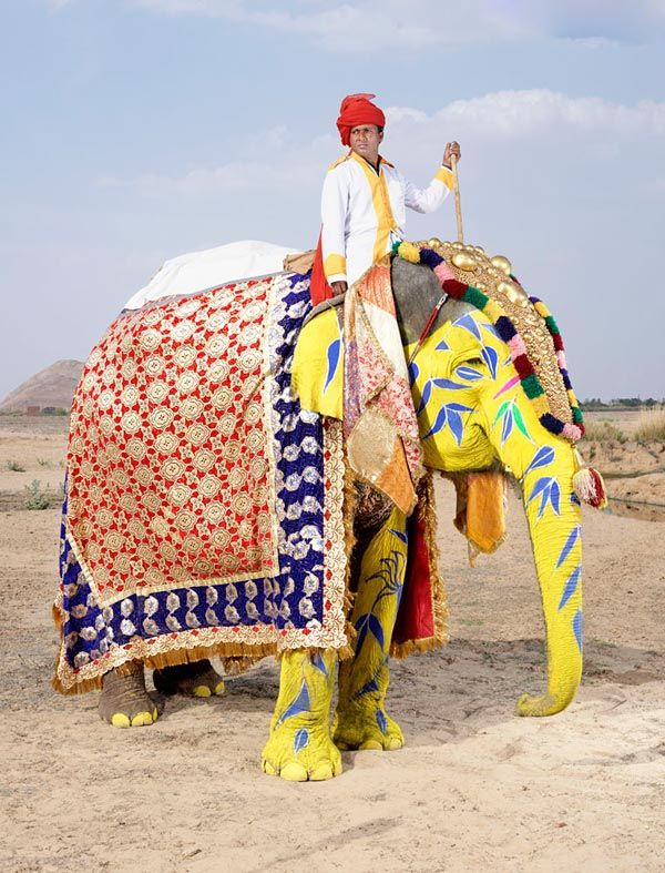 تصاویری جالب از آرایش فیل های هندی