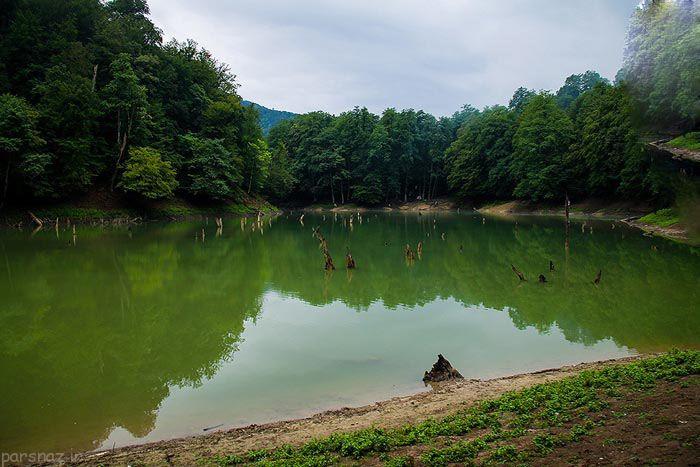آشنایی با یکی از زیباترین جنگل مازندران