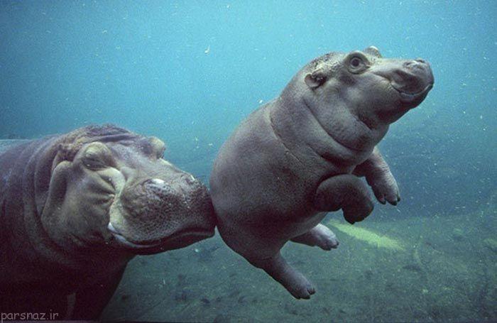 لحظه ی شکار لبخند حیوانات در قاب تصویر