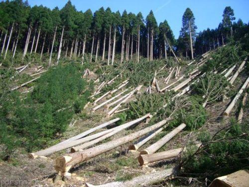 نابودی جنگل های ایران در آینده ای خیلی نزدیک