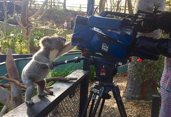 عکس های دیدنی از علاقه حیوانات به عکاسی