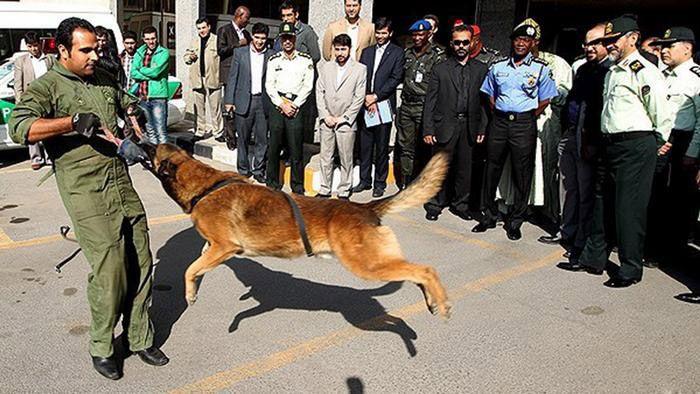 آشنایی با سگ های مواد مخدر و نجات در جهان
