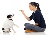 درمورد نحوه تربیت و آموزش سگ بیشتر بدانید