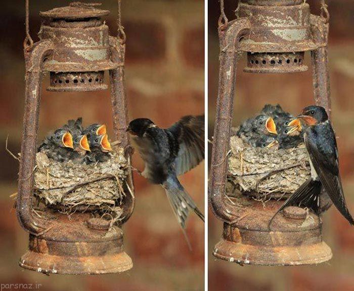 پرنده ها به دنبال مکان مناسب برای ساختن لانه خود