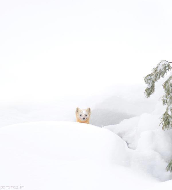 توانایی بی نظیر حیوانات در سرمای زمستان