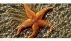 رازهای عجیب درباره ستاره دریایی