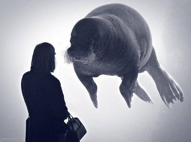 عکس های جالب و دیدنی از دنیای حیوانات در طبیعت
