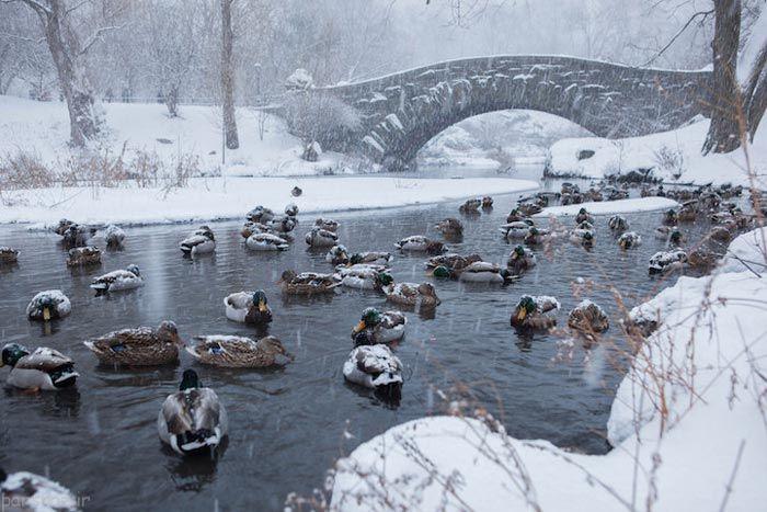 تصاویر زیبا و شگفت انگیز زمستان در جهان هستی