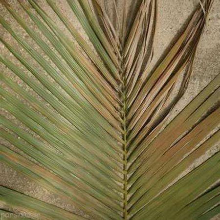 نکاتی مفید برای نگهدای از گیاهان خانگی