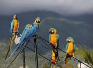 دوستی جالب طوطی های کاراکاس با انسان ها