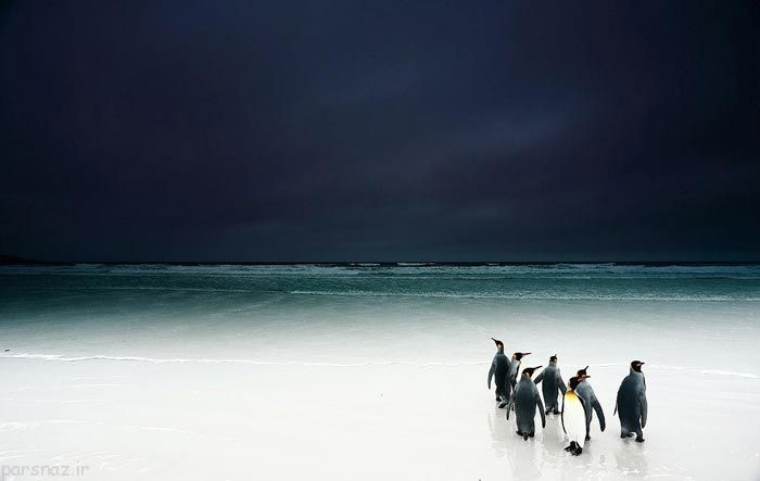 عکس های برگزیده مسابقه بین المللی عکس حیات وحش