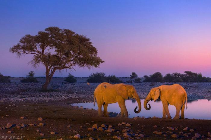 عکس های دیدنی از طبیعت های شگفت انگیز جهان