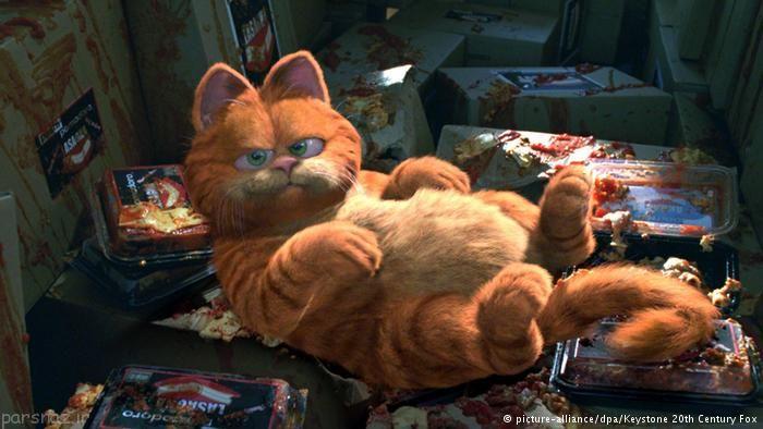 اصلی ترین گربه های شناخته شده در دنیا