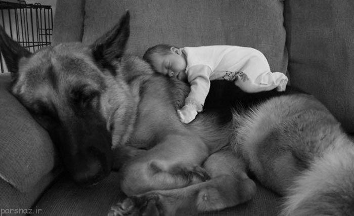 قشنگترین وابستگی سگ ها با کودکان +عکس