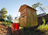 اختراعی مفید برای زنبور داران عسلی