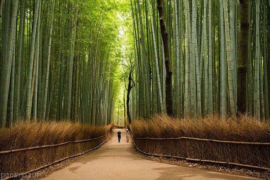 به این دلایل باید به ژاپن سفر کنیم