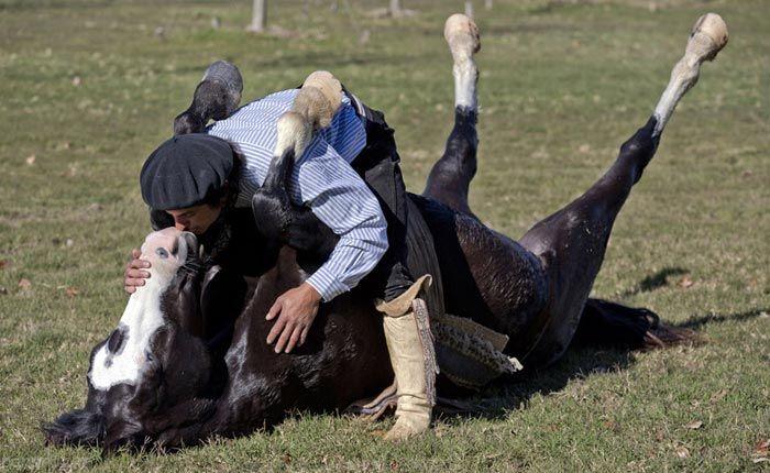 انسان ها و حیوانات به روایت تصویر