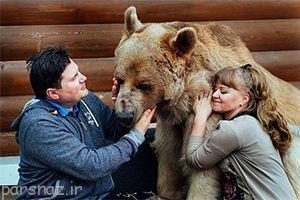 زندگی صمیمی خانواده روسی با خرس عظیم الجثه