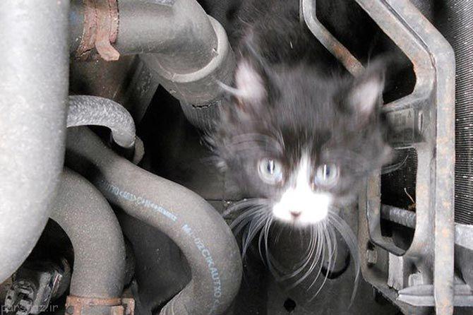 گربه های خیابانی برای گرم شدن کجا میروند؟