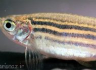 رابطه شخصیت ماهی ها با شکل ظاهری آنها