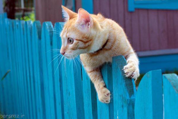 مطالب جالبی که درباره گربه ها نمی دانستید