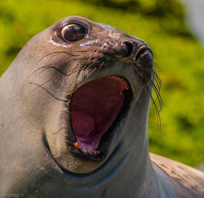 تصاویری از چهره حیوانات وقتی شگفت زده می شوند
