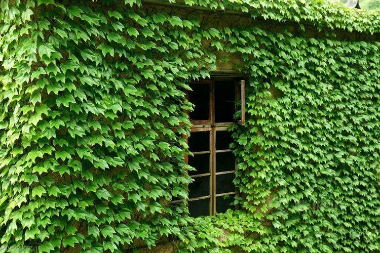 هم آغوشی روستا با طبیعت +عکس