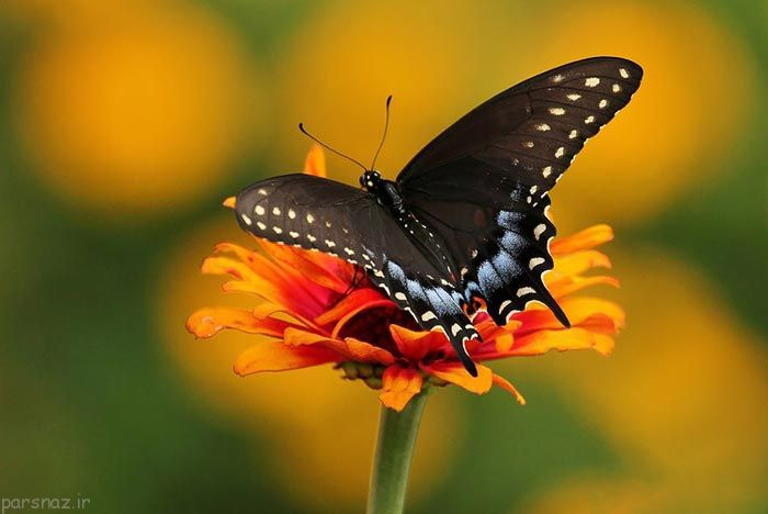 دنیای زیبا و جالب پروانه ها به روایت عکس