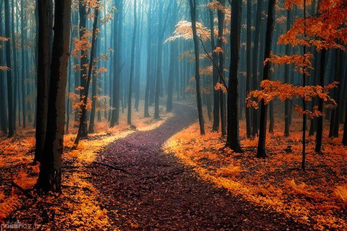 زیبایی های پاییز در جنگل های رنگارنگ