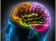 تقویت حافظه و خوراکی های مفید و موثر
