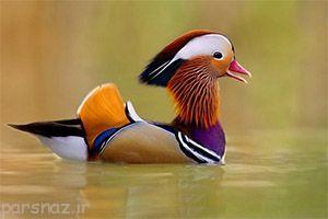 عکس های جذاب از زیباترین پرندگان دنیا