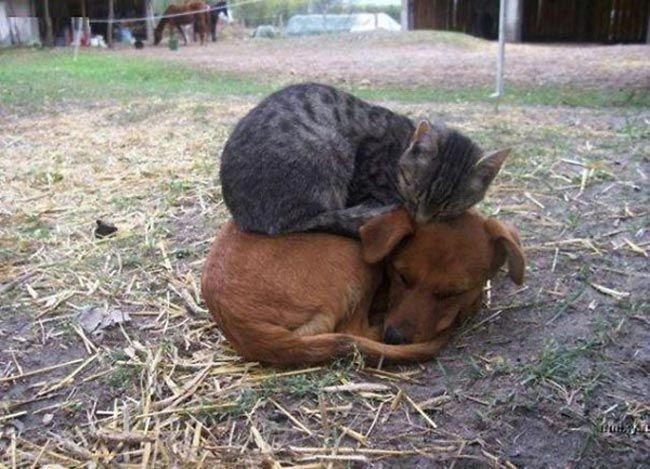 دوستی حیوانات و مهربانی آنها به روایت تصویر