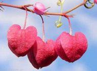 تفاوت بین عشق و شهوت را بدانیم