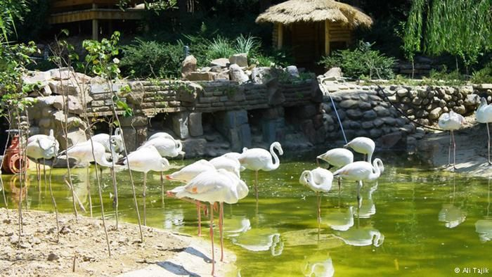 عکس های جذاب از بزرگترین باغ پرندگان ایران