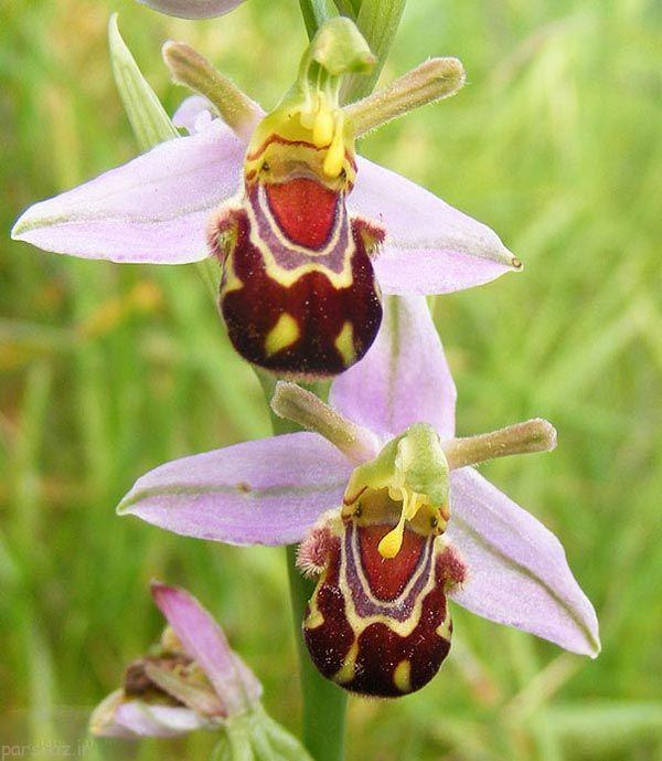 زیباترین و جالب ترین گلهای دنیا