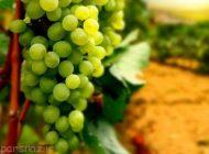 معرفی گیاهان دارویی ضد حساسیت و آلرژی