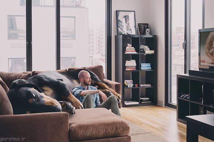 صاحبی که بزرگترین سگ دنیا را دارد