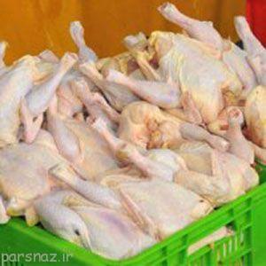دادن هورمون به مرغ و حقایقی درباره آن