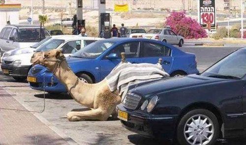 خوش گذرانی بچه پولدارهای دبی را ببینید