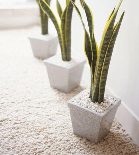 تصفیه هوای خانه با این گیاهان آپارتمانی