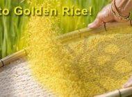 برنج مصنوعی واقعیت مضر زندگی ما